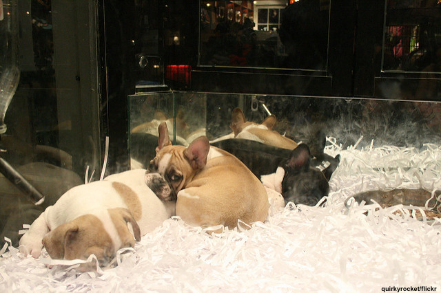 NEW YORK STATE – BRINGING AN END TO PET STORE PET SALES