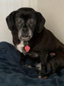 Jasper (bonded with Marley)