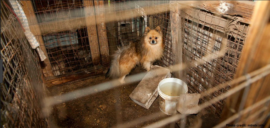 PUPPY MILLS AND USDA INSPECTIONS