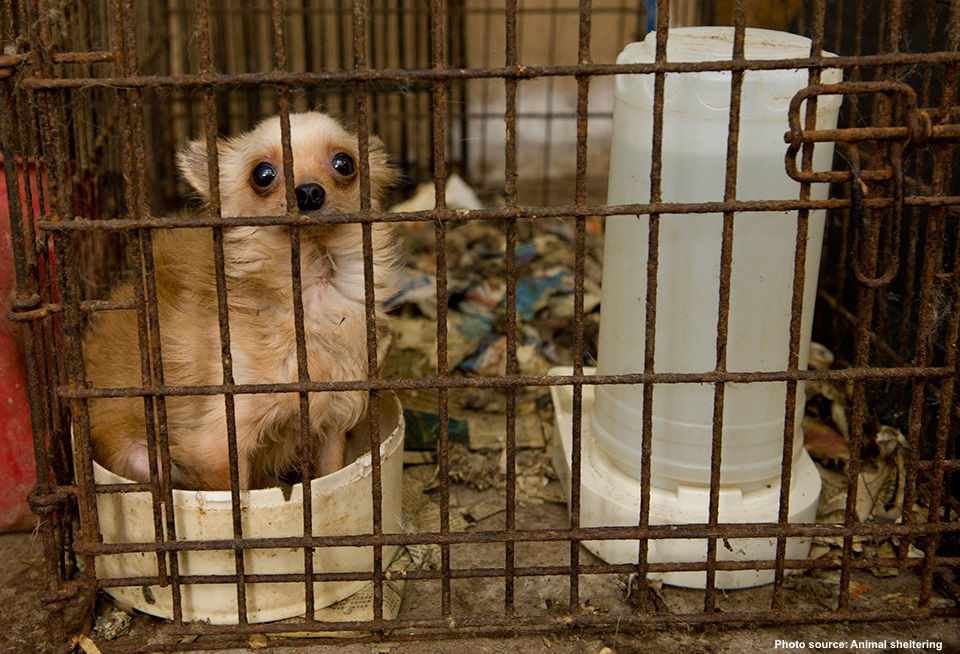 OHIO'S NEW PUPPY MILL LAW NOW IN EFFECT