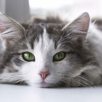 cat-2571971_640