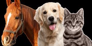HORSE, DOG, CAT