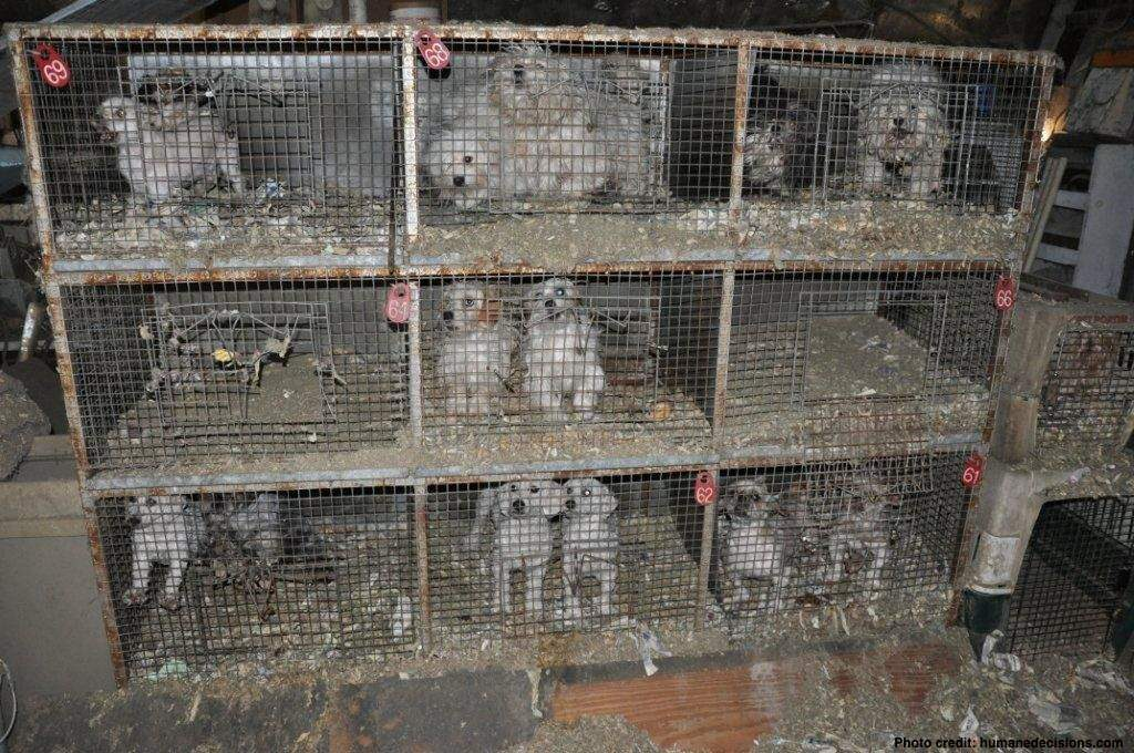 What Are Puppy Mills Save A Pet Usa