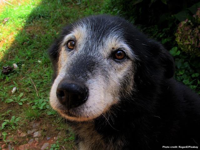 November: Adopt a Senior Pet Month